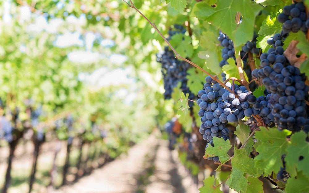 Foire aux Vins : dates, conseils et bons plans